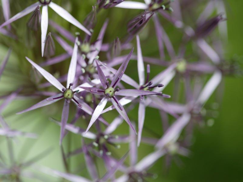 04-giardino-subtropicale