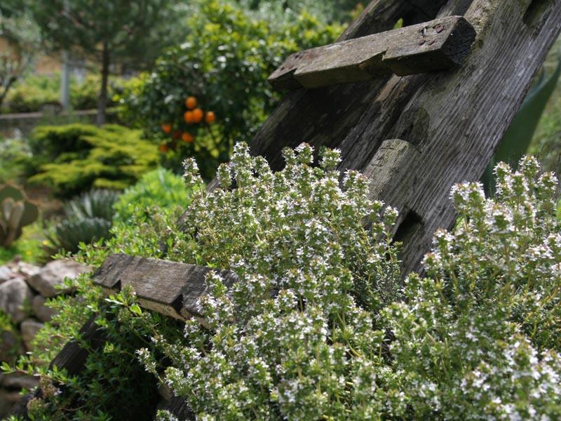 05-giardino-subtropicale