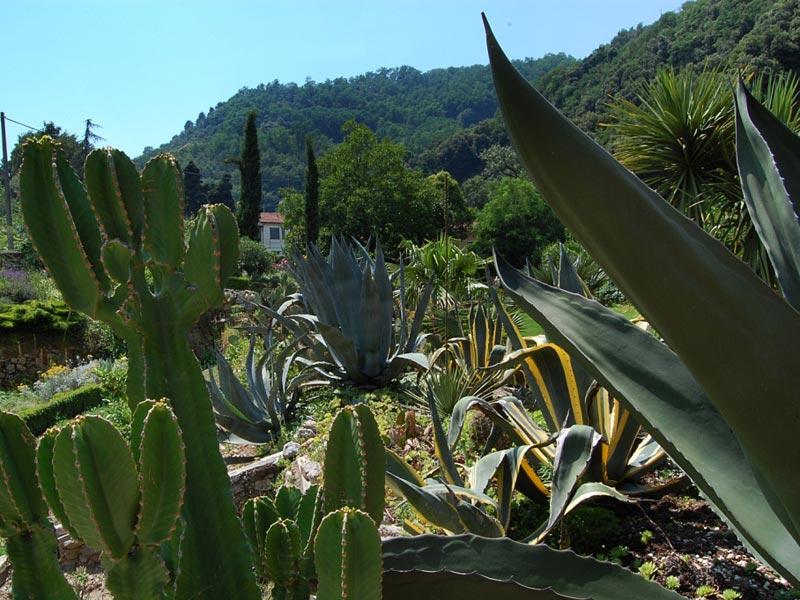 11-giardino-semidesertico