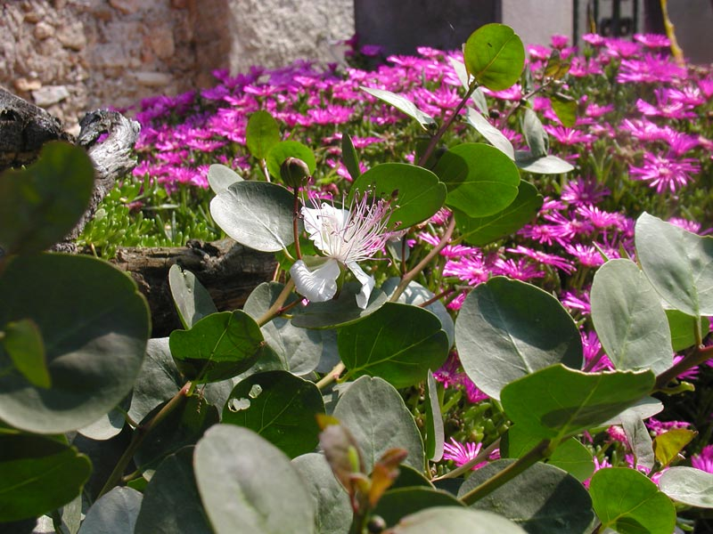 18-giardino-subtropicale