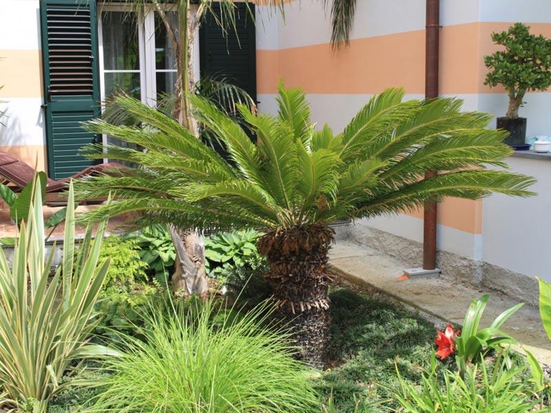 20-giardino-subtropicale